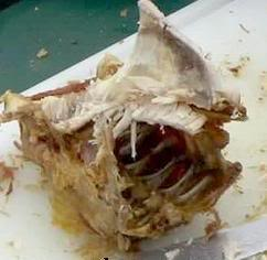 Turkey carcass Pictures, Images and Photos