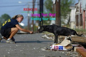 Want to Make a Difference? Foster!