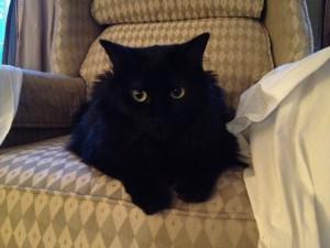 Oscar and A New Chair