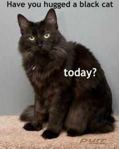 Black Cat Appreciation Day 2012