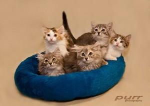 Cat Herders Day 2012