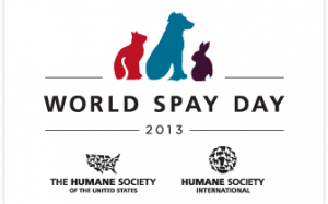 Calling All Bloggers: Help Promote World Spay Day 2013
