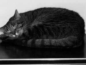 In Black and White: Catnap Weather