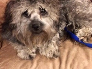Help Me and My Puppy Parlor Friends Get Medical