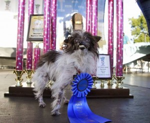 Peanut, World's Ugliest Dog 2014