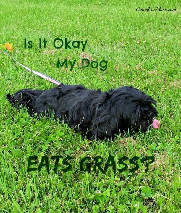 Is It Okay My Dog Eats Grass?