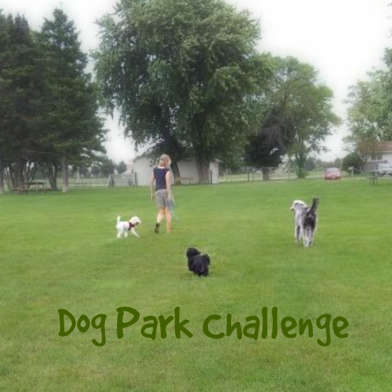 Dog Park Challenge