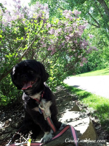 CindyLu with Lilacs in Spring