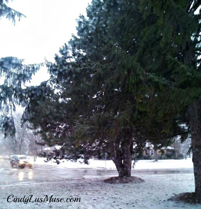 CindyLusMuse-Tree