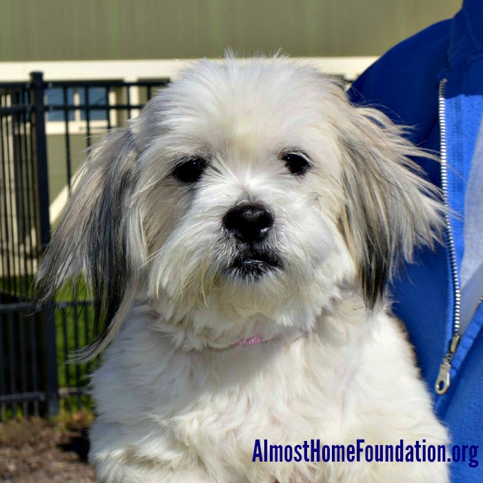 Lilly AHF Rescue From Denver