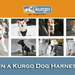 Kurgo Dog Harness Giveaway