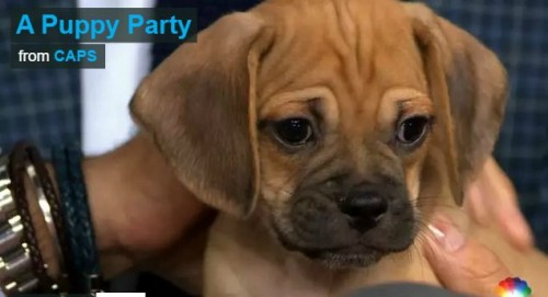 PuppyParty.com Linked to Puppy Mills