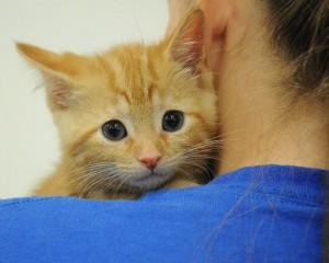 Top Ten Reasons to Spay/Neuter Your Pet